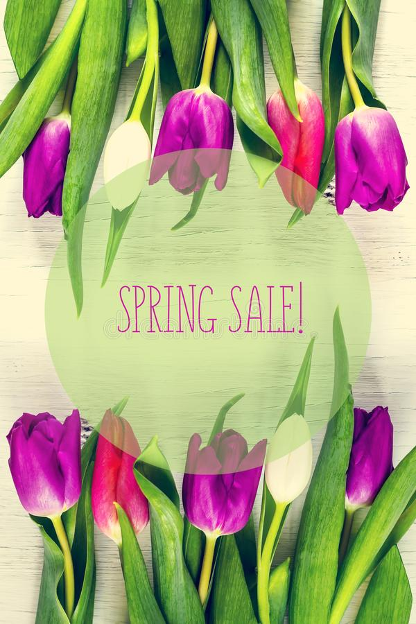 Beautiful tulips on white tree background. Concept Spring sale. stock photos
