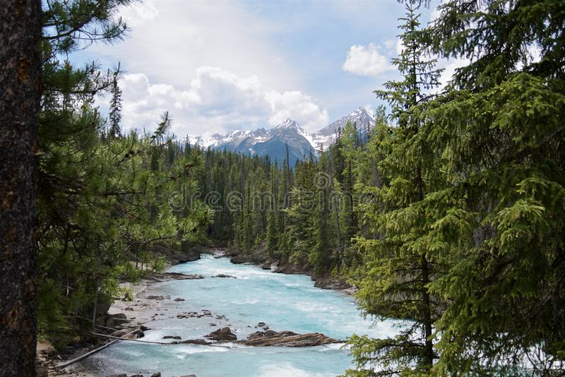 Beautiful turquoise Kicking Horse river with the purest glacier water flowing past Natural Bridge in evergreen forest stock photography