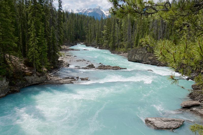 Beautiful turquoise Kicking Horse river with the purest glacier water flowing past Natural Bridge in evergreen forest, near Field stock images