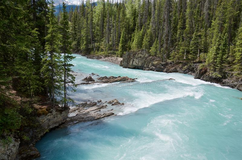 Beautiful turquoise Kicking Horse river with the purest glacier water flowing past Natural Bridge in evergreen forest, near Field stock photos
