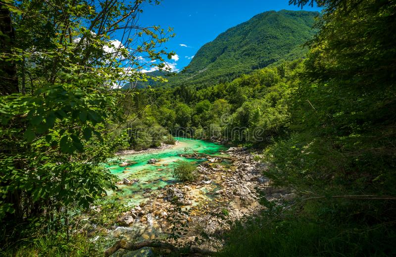 Beautiful turquoise Soca river. In the Triglav National Park stock image