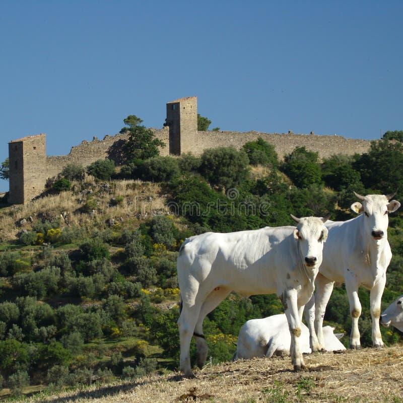 Beautiful Tuscany royalty free stock photo