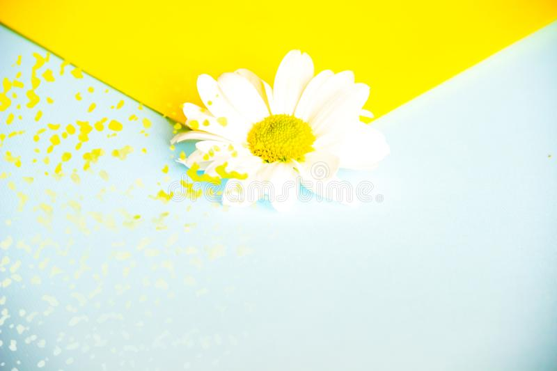 Beautiful two-color envelope with white daisy flower in the center close-up. Yellow and blue splashes and blur. stock photos