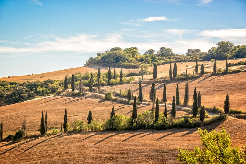 Beautiful typical landscape of Tuscany with rows of cypresses, La Foce, Tuscany Italy stock photo