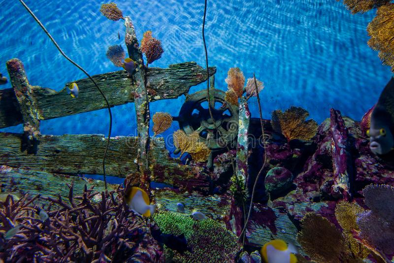 Beautiful Under Water Colorful Wooden Wheel wtih Fishes stock photos
