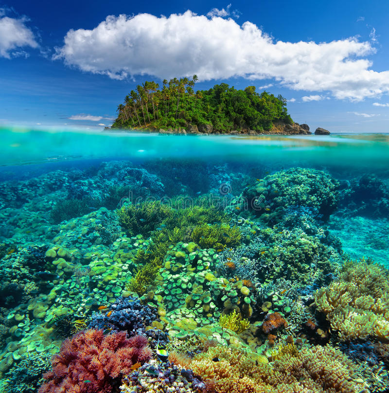 Beautiful underwater garden on the background of the island. stock images