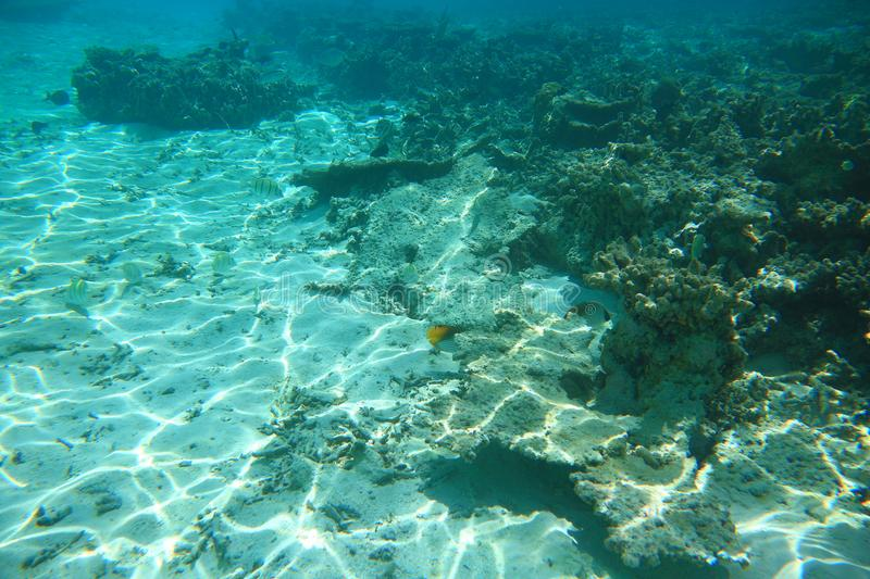 Beautiful underwater world.Dead coral reefs and colorful fishes.Turquoise water and white sand bottom, Indian Ocean,. Maldives stock photos