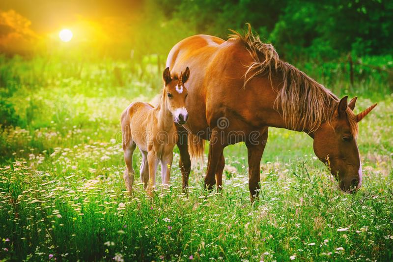 Beautiful unicorns Mare and Foal in the magical forest landscape royalty free stock image