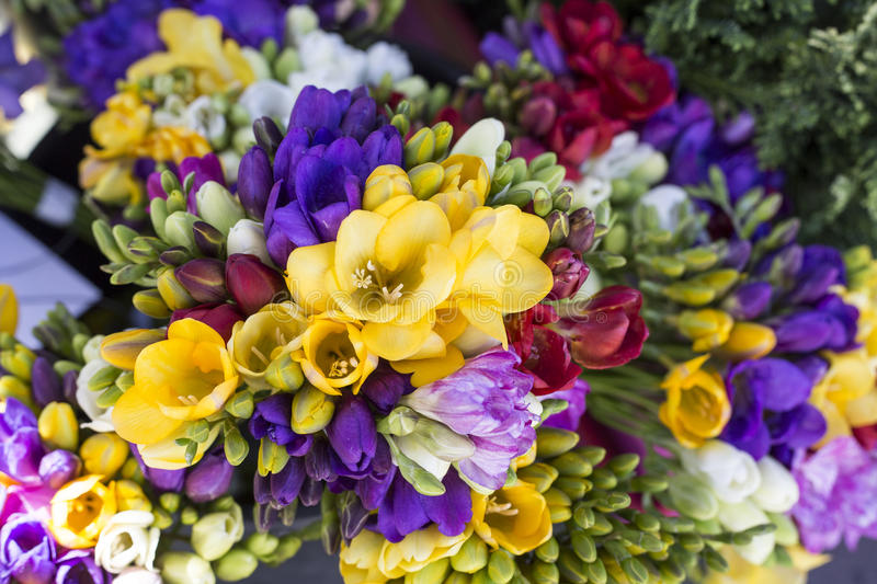 Beautiful various colorful spring flowers stock photo
