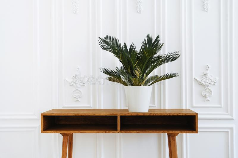 Beautiful vase with plants. Ceramic pot on a wooden table. Home indoor plants. Beautiful aesthetic interior. Minimalism in the royalty free stock photography