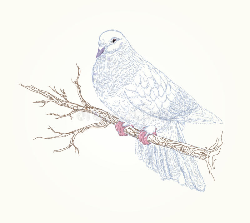 Beautiful Vector Bird On Flowering Branch Royalty Free Stock Images