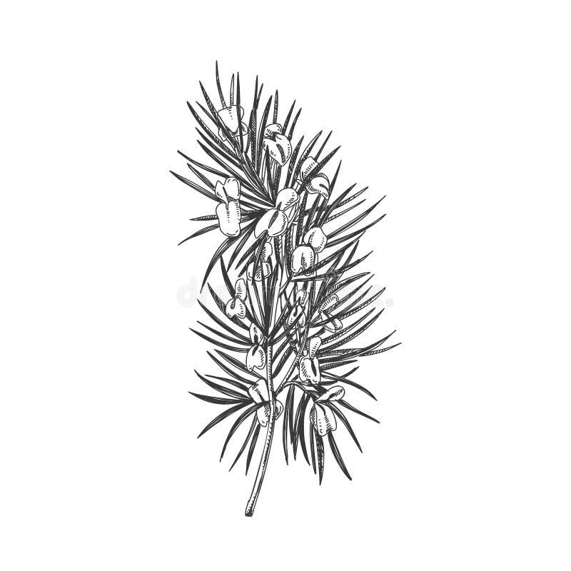 snap beautiful vintage hand drawn tree of life vector