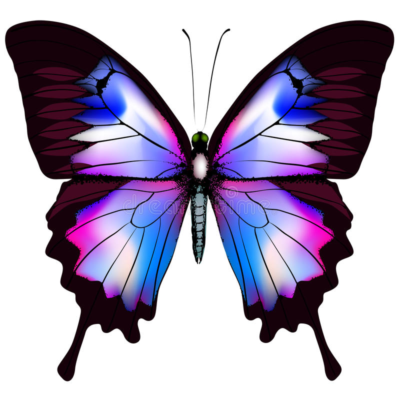 Download Beautiful Vector Isolated Blue Butterfly Stock Vector - Image: 29940462