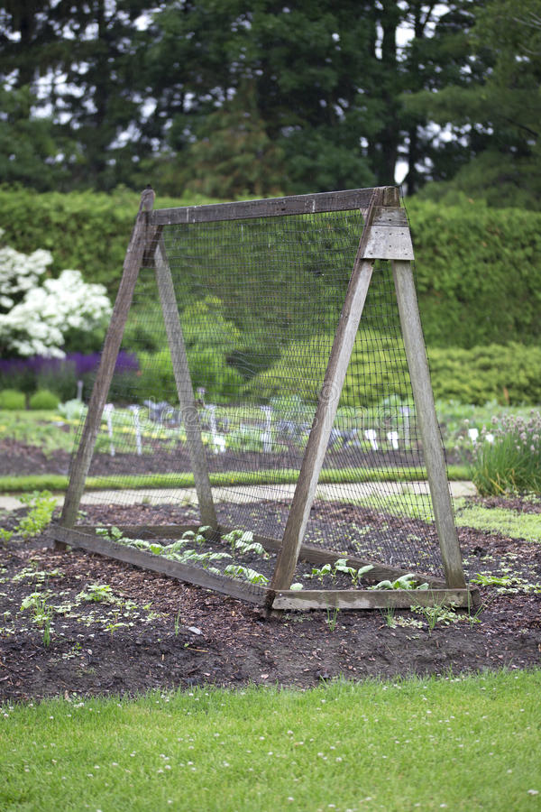Download Beautiful Vegeable Garden With Pyramid Plant Support Stock Image    Image: 58327451