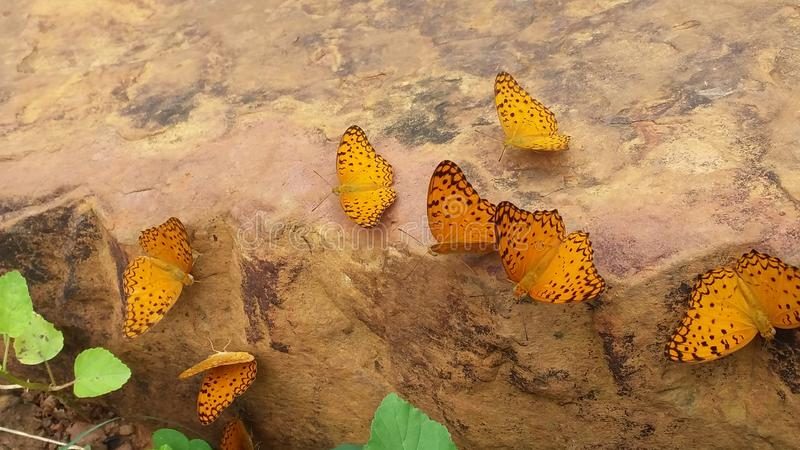 Beautiful yellow butterfly, land stone, royalty free stock photos