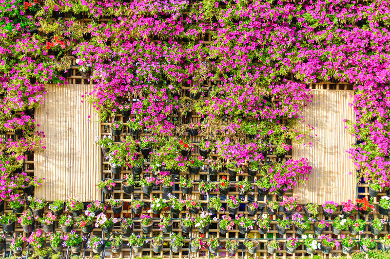 Beautiful vertical garden. With plants on bamboo house stock photo
