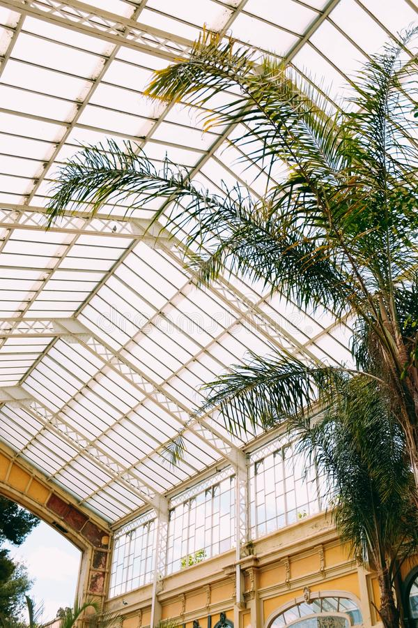 Beautiful vertical shot of a large exotic tree in a botanical garden with a glass ceiling. A beautiful vertical shot of a large exotic tree in a botanical garden royalty free stock photos