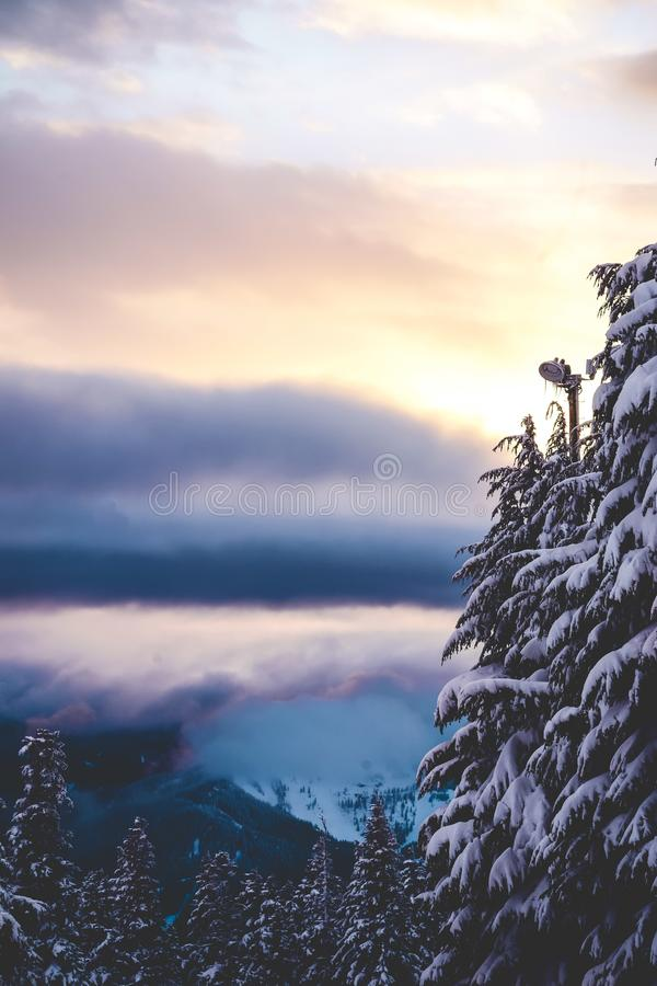 Beautiful vertical shot of spruces under a pink and purple sky with clouds. A beautiful vertical shot of spruces under a pink and purple sky with clouds royalty free stock photos