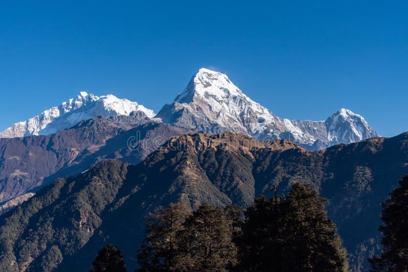 Beautiful view of Annapurna range with himchuli Pokhara nepal. Beautiful view of Annapurna range with himchuli Pokhara in Nepal stock images