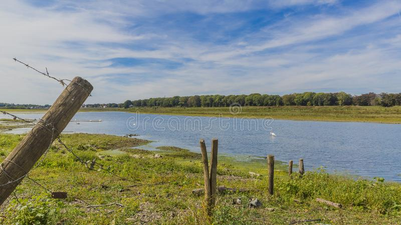 Beautiful view of a barbed wire fence with wooden poles and the river Maas. With blue waters and swans swimming in the background in river park Maasvallei South stock images