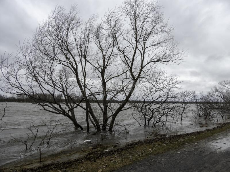 Beautiful view of the bare trees and bicycle path near the water in Ottawa, Canada. The beautiful view of the bare trees and bicycle path near the water in stock photography