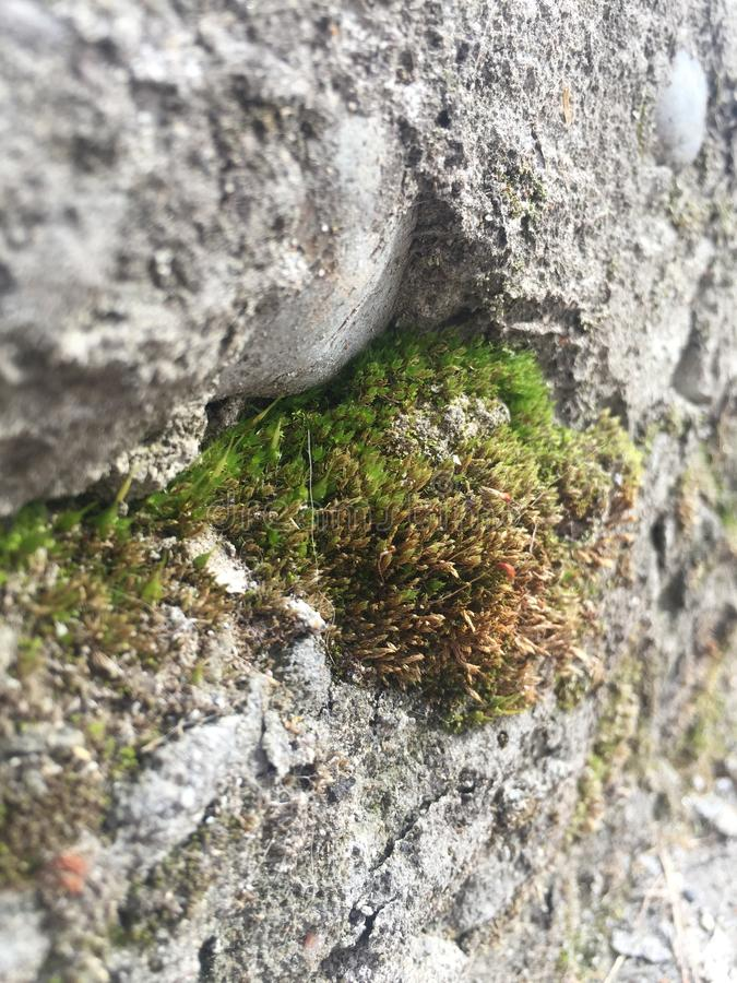Beautiful view on the combination of stone and moss. Breath taking view on nature. Combination of live and death royalty free stock images