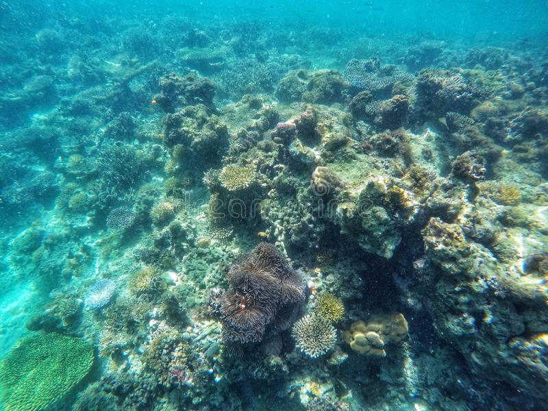Beautiful view of coral colony underwater. With small lovely Nemo royalty free stock photos