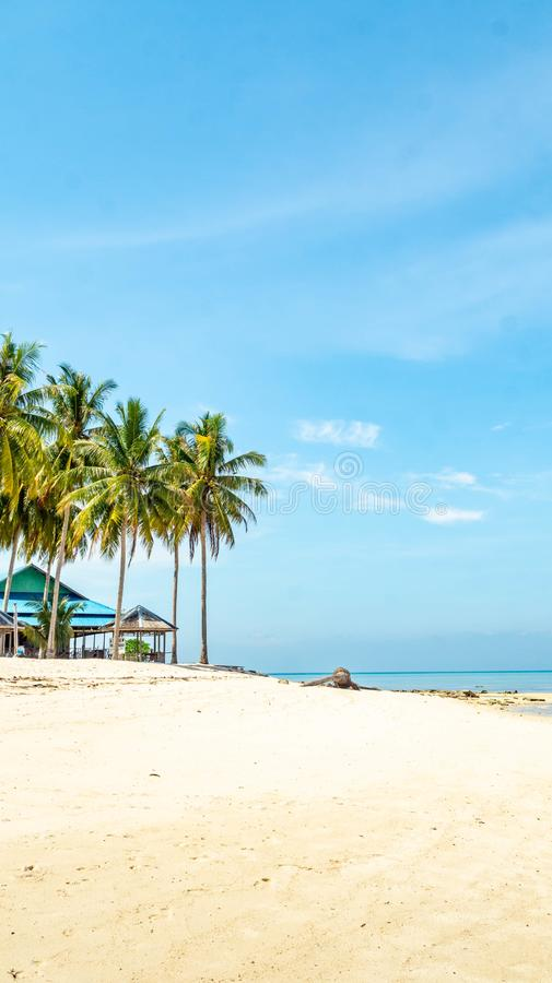 Beautiful view at derawan Island, Indonesia. coconut tree and white sand on the beach stock photography