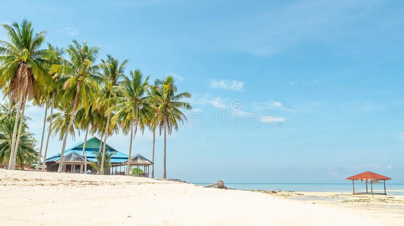 Beautiful view at derawan Island, Indonesia. coconut tree and white sand on the beach stock image