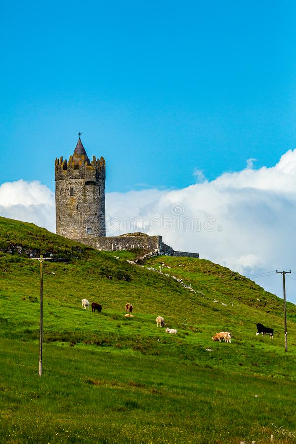 Beautiful view of the Doonagore castle tower on a hill with cattle grazing royalty free stock photos