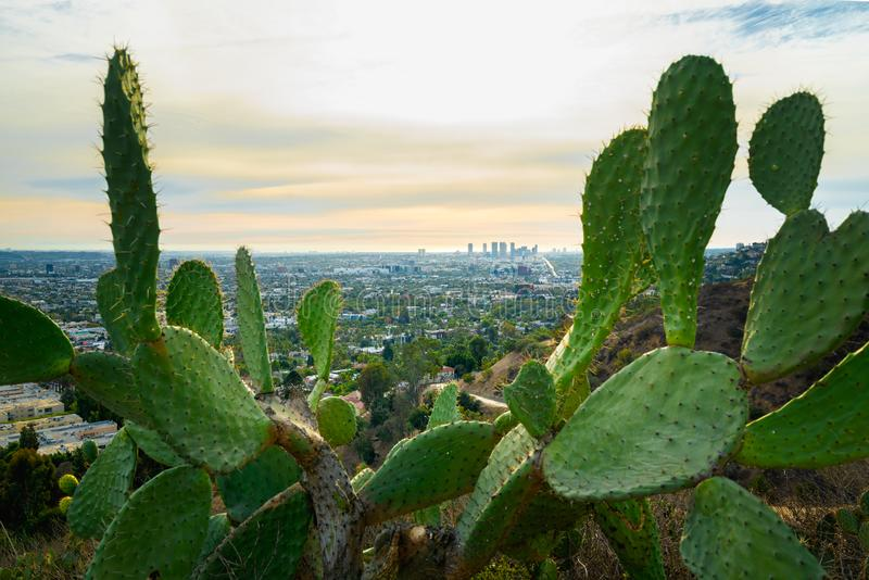 View of downtown Santa Monica from Runyon Canyon Park, Los Angeles royalty free stock photo