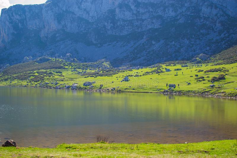 Beautiful view of Ercina Lake in Covadonga Lakes, Asturias, Spain. Green grassland with reflections in the water and mountains at. The background royalty free stock images