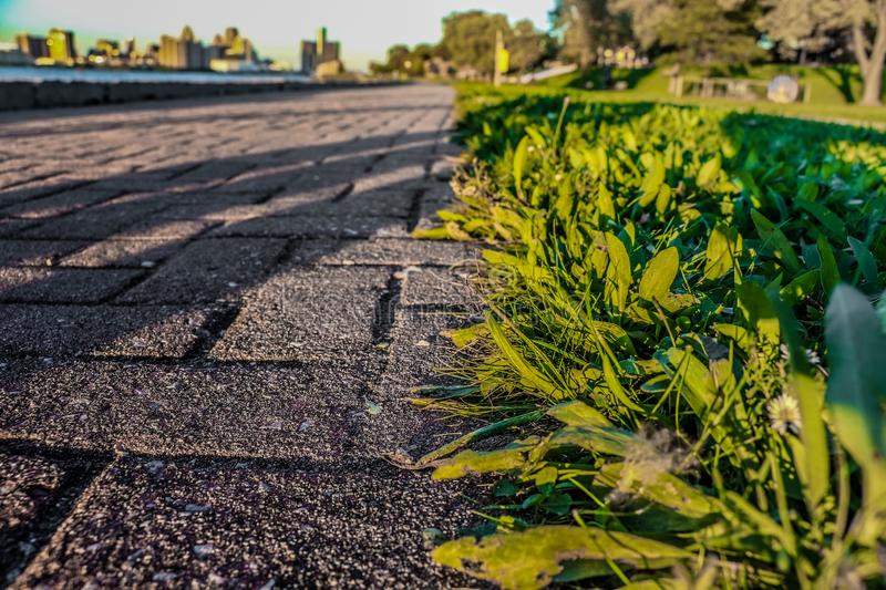 A MORNING ON A FOOTPATH. A BEAUTIFUL VIEW OF A FOOTPATH IN THE MORNING FROM LOW ANGLE royalty free stock photography