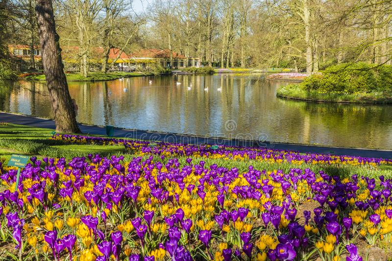 Beautiful view of the garden with yellow and purple flowers with many trees and a lake in the background royalty free stock image