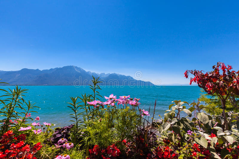 Beautiful view of Geneva lake at Montreux. Beautiful view of the Alps, Geneva lake from Montreux city with colorful flowers in foreground on a sunny summer day royalty free stock photo