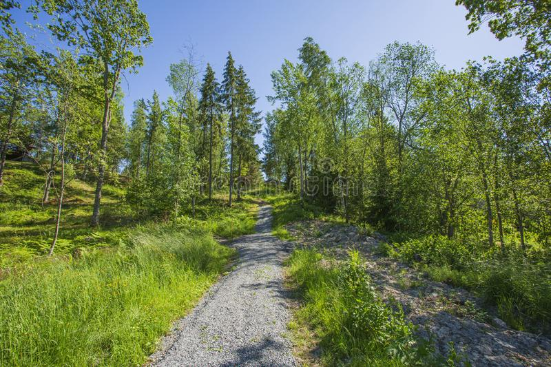 Beautiful view of gravel road  on sunny summer day. Green trees and plants on blue sky background. royalty free stock photo