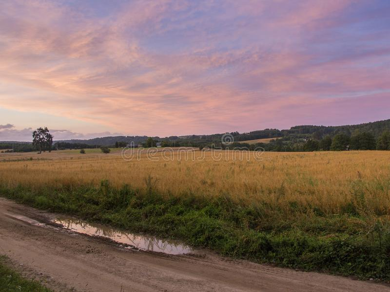 Fields and meadows at sunset. Beautiful view of green fields and meadows at sunset in Lithuania Summer evening rural landscape panorama with a meadow and road royalty free stock image