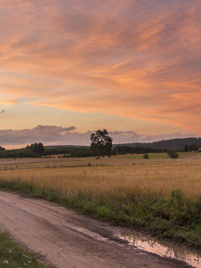 Fields and meadows at sunset. Beautiful view of green fields and meadows at sunset in Lithuania Summer evening rural landscape panorama with a meadow and road royalty free stock photo