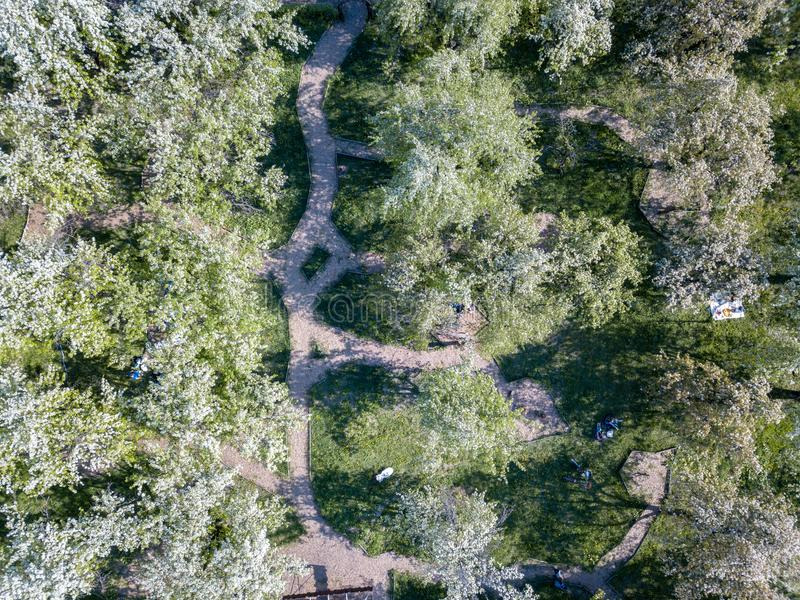 Aerial view of a green park on a sunny day. Kiev, Ukraine. royalty free stock photo