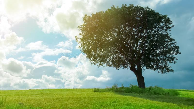 Beautiful view of green tree growing in field under cloudy sky, weather forecast. Stock footage royalty free stock image