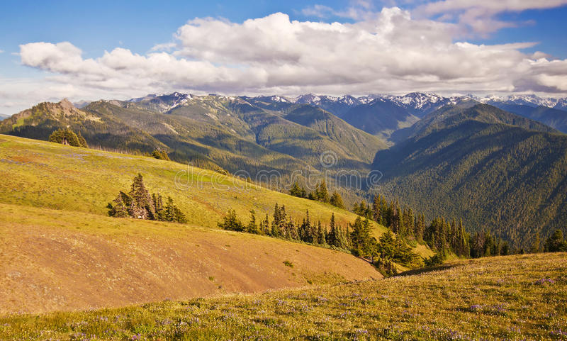 Beautiful view from hurricane ridge royalty free stock photography