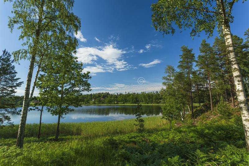 Beautiful view of lake landscape surrounded with green forest trees and plants. Blue sky reflecting in mirror water surface. Sweden. Europe. Scandinavia stock photos