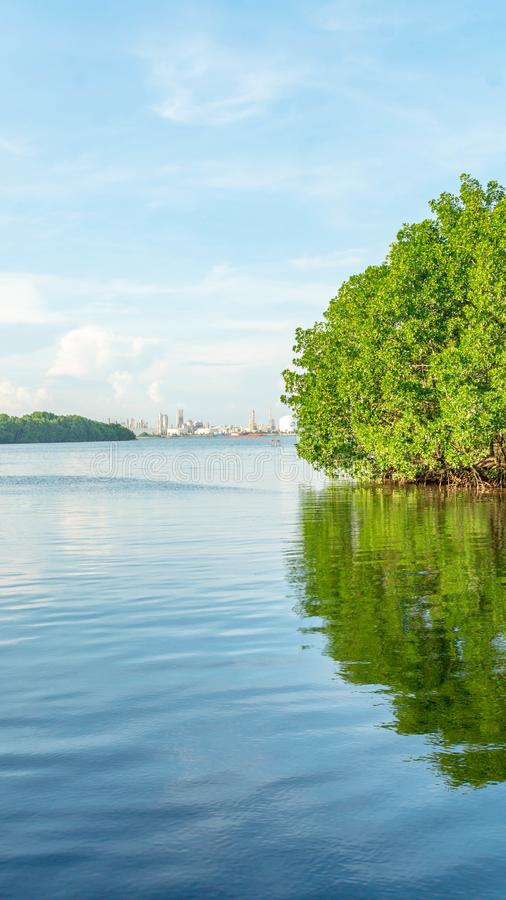 Beautiful view of mangrove forest at Kutai National Park, royalty free stock photo