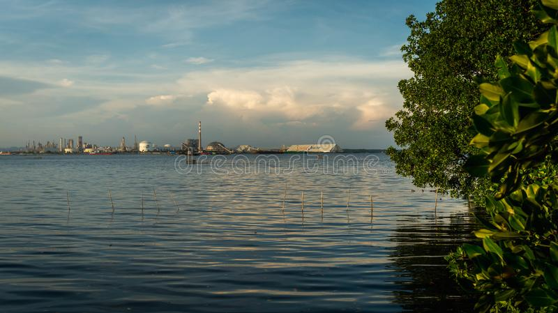 beautiful view of mangrove forest at Kutai National Park, stock images