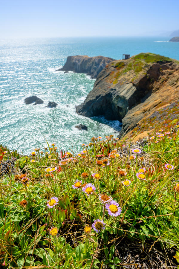Beautiful view on a meadow, ocean and bird island. Beautiful view on a meadow, ocean and cliff on a sunny day in California, USA royalty free stock photography