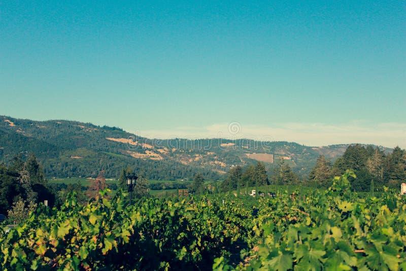 Beautiful view of Napa Valley Vineyard, California stock image