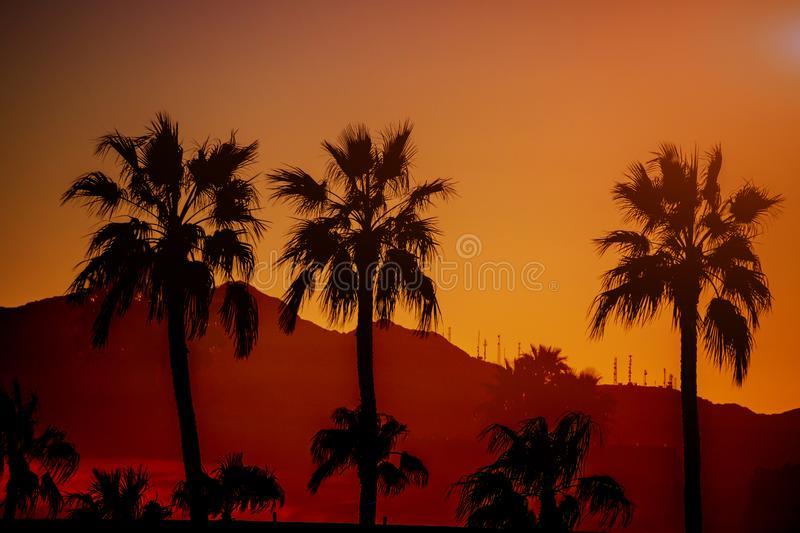 Beautiful view nature mountain of arizona with silhouette palm tree on the sunset time stock photography