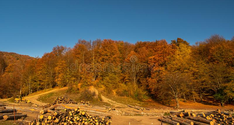 Beautiful view of a nice colored forest. Surrounded by tree logs and dirt paths, in a sunny day in autumn stock photo