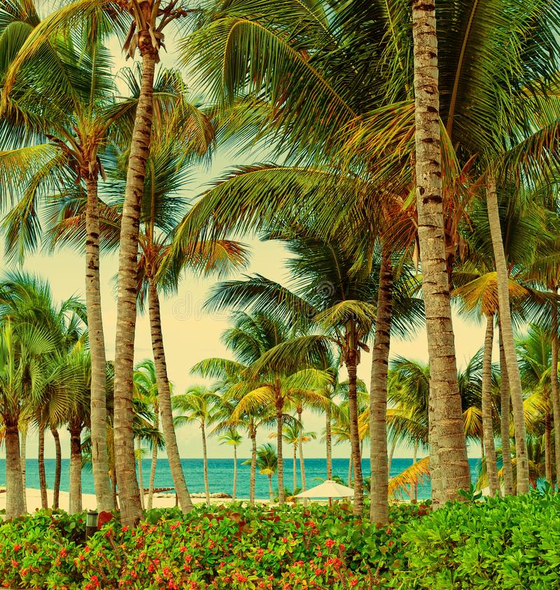 Beautiful view of the ocean through the palm trees. Tropical greenery. The rest of the south countries stock photo