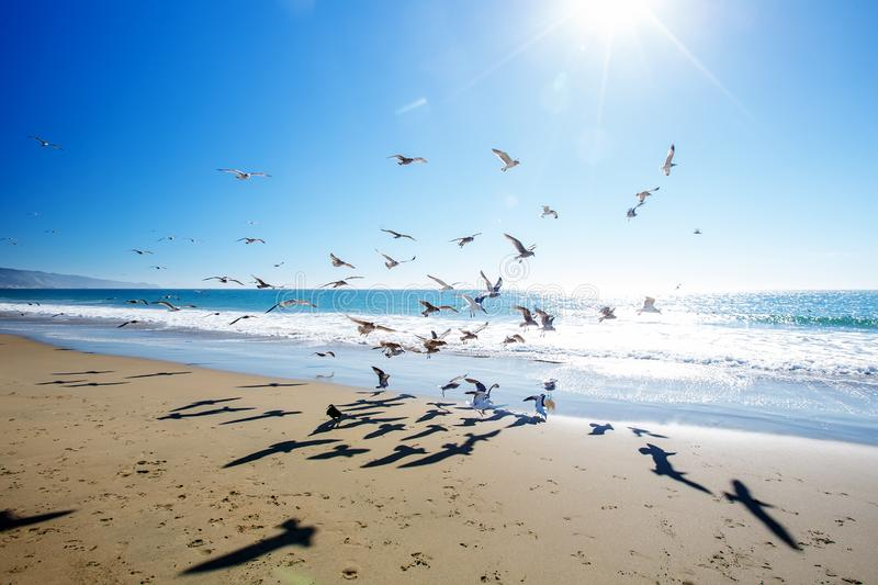Beautiful view of the ocean with seagulls.  stock photos